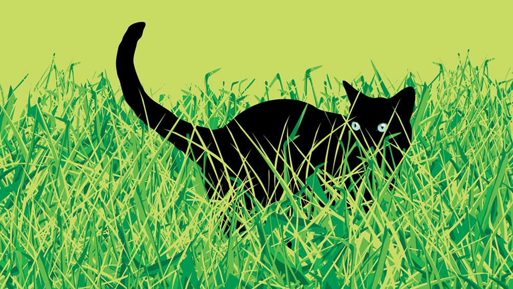 cat_in_grass